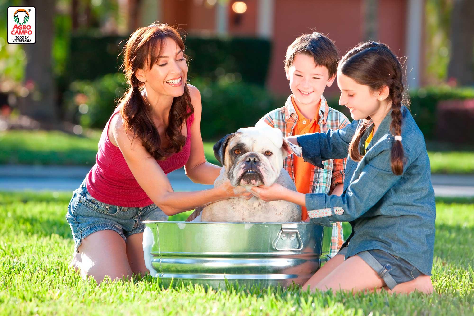 como-bañar-a-un-perro
