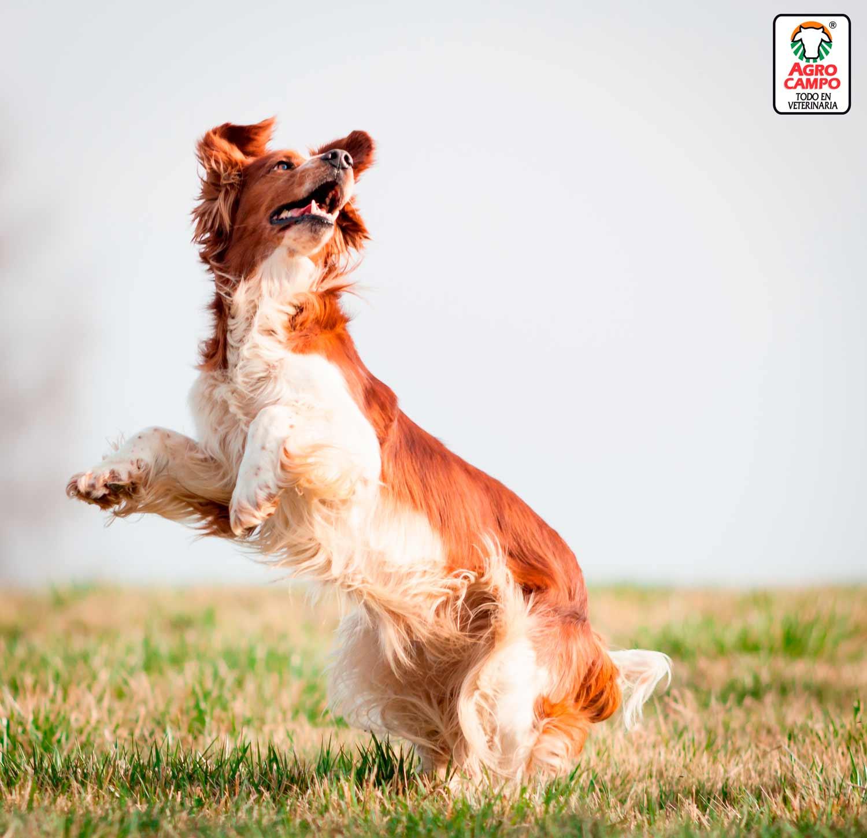 suplementos-y-vitaminas-para-perros
