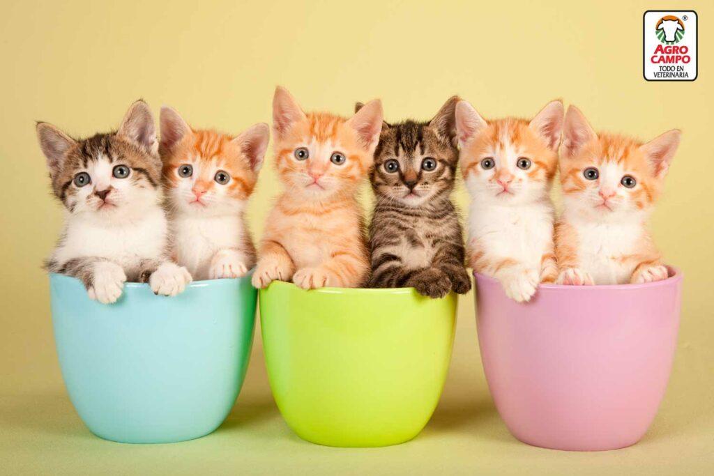 como-alimentar-un-gato-bebe