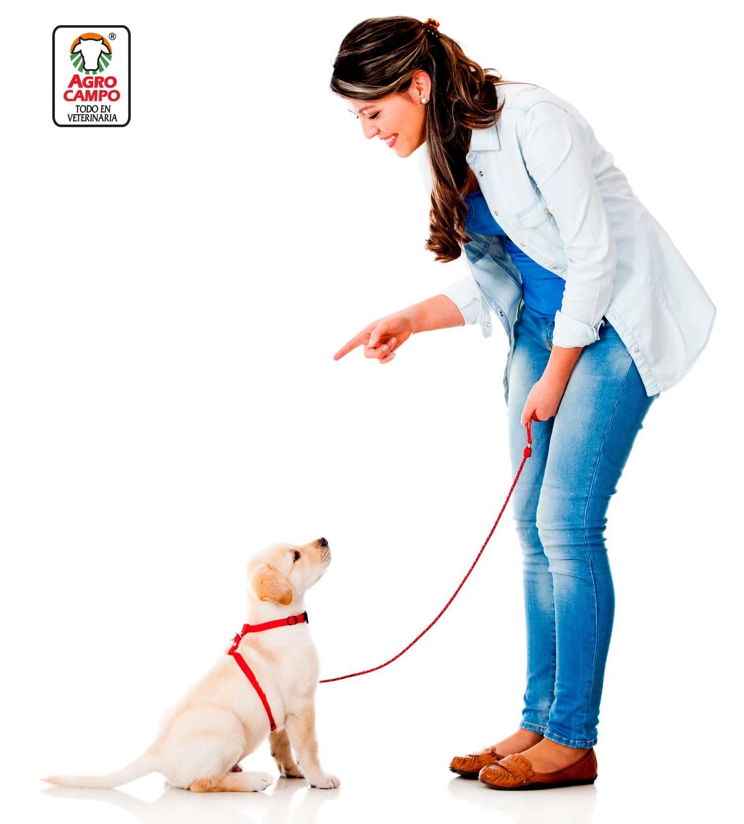 como-educar-a-un-cachorro