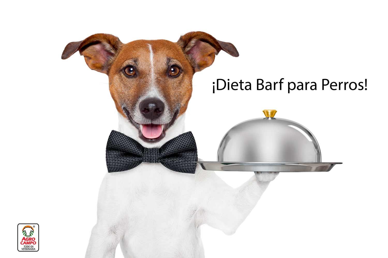dieta-para-perros