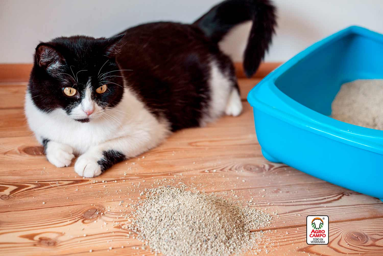 tipos-de-arena-para-gatos