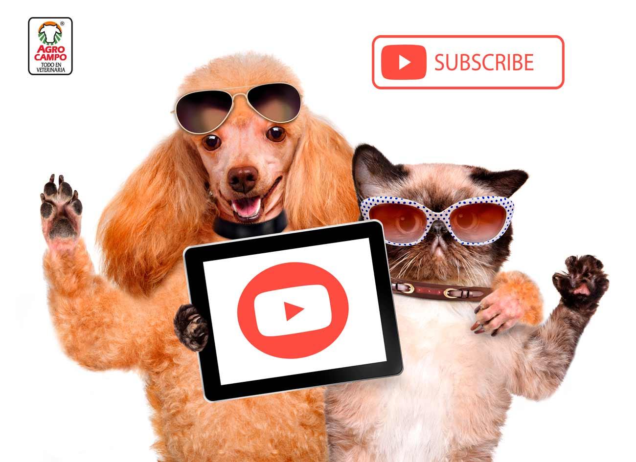 agrotips-youtube