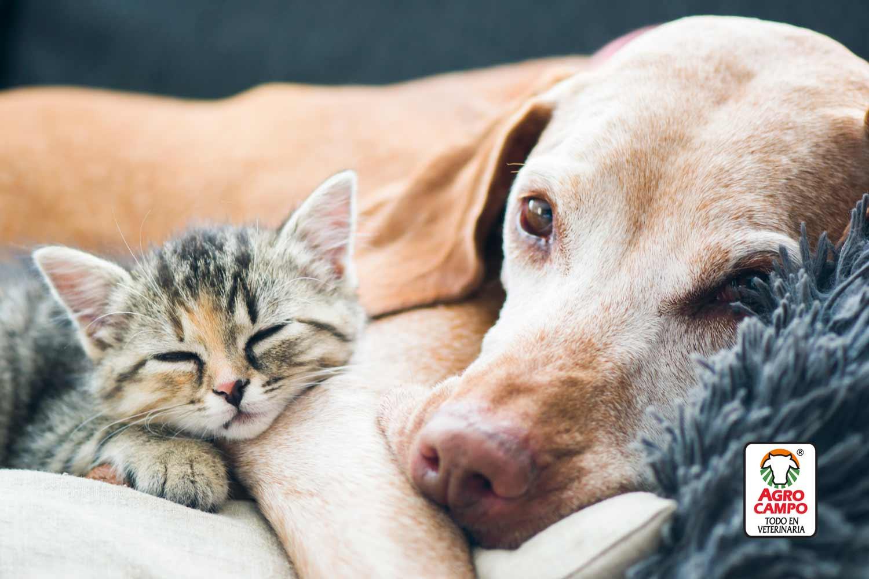 caracteristicas-perros-y-gatos-criollos