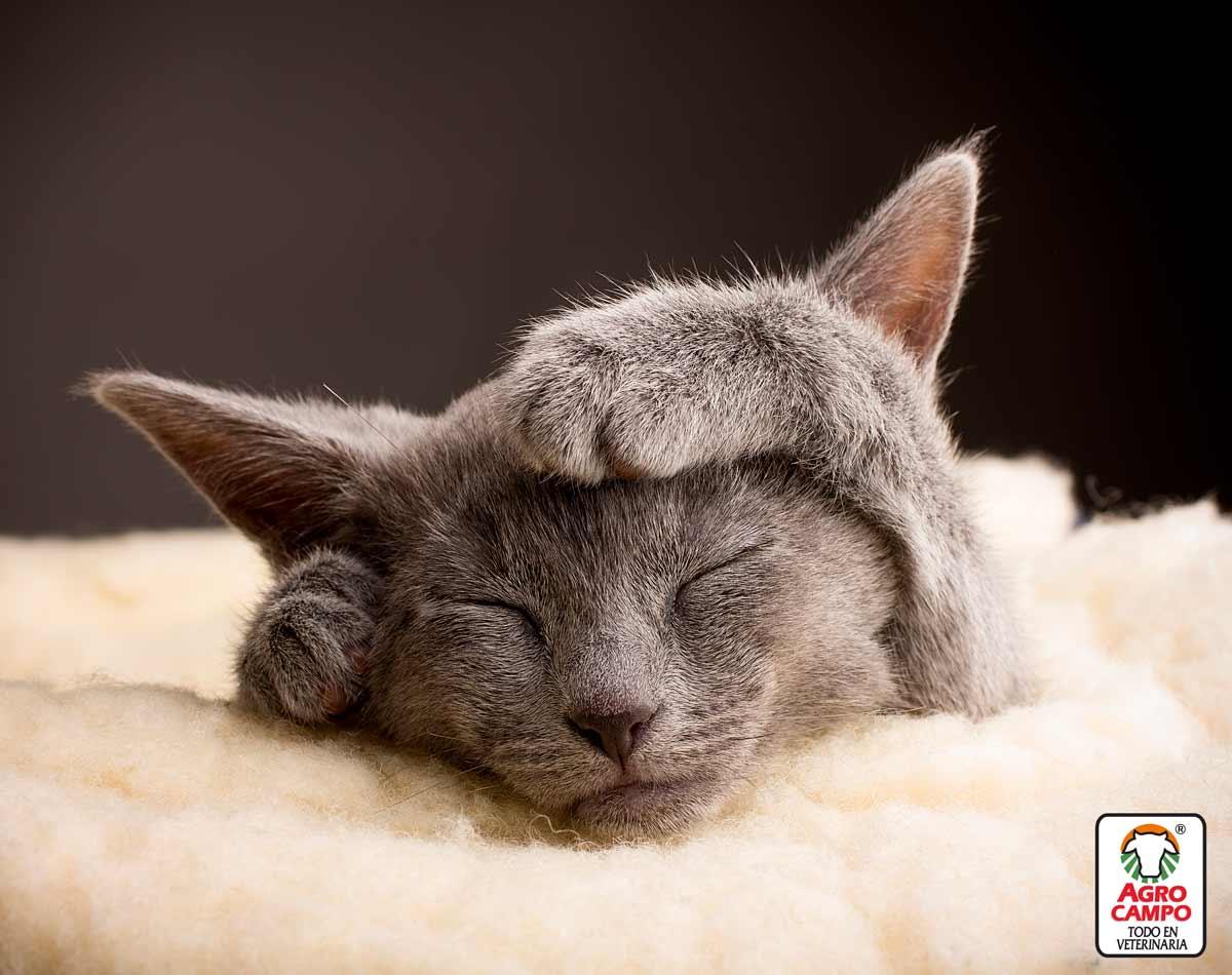 gatos-criollos