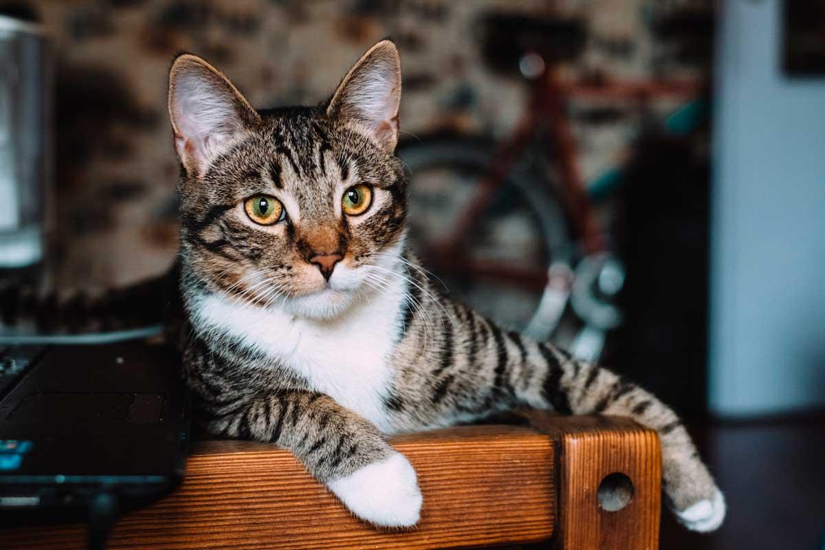 nombres-para-gatos-machos
