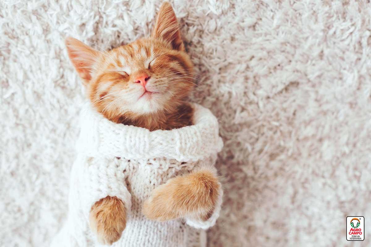 ¿Qué significa soñar con gatos bebes?