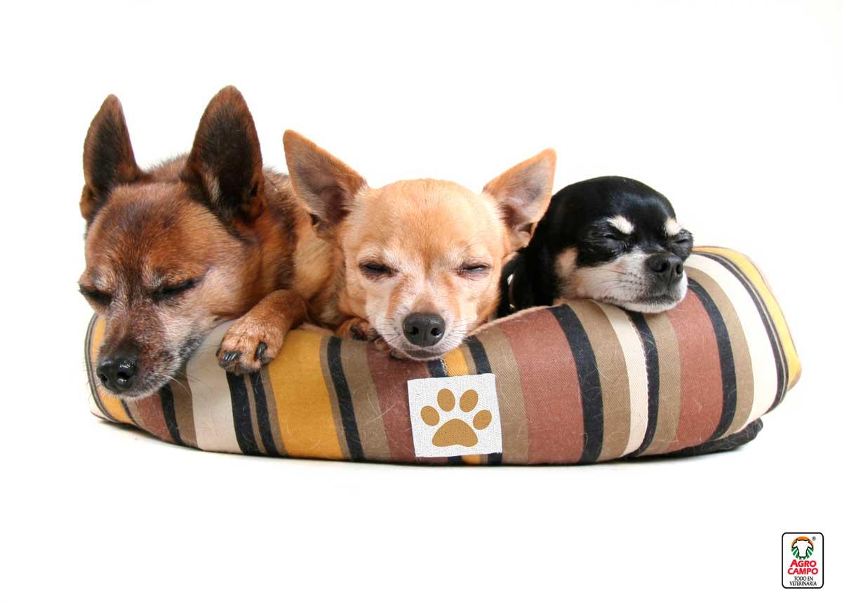 Perros De Raza Pequeña El Top 10 De Razas De Perros