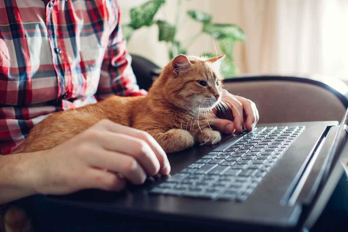 como-educar-un-gato