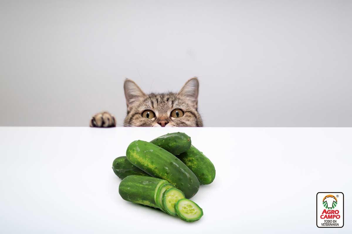 gatos-y-pepinos