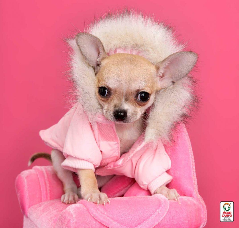 nombre-perro-hembra