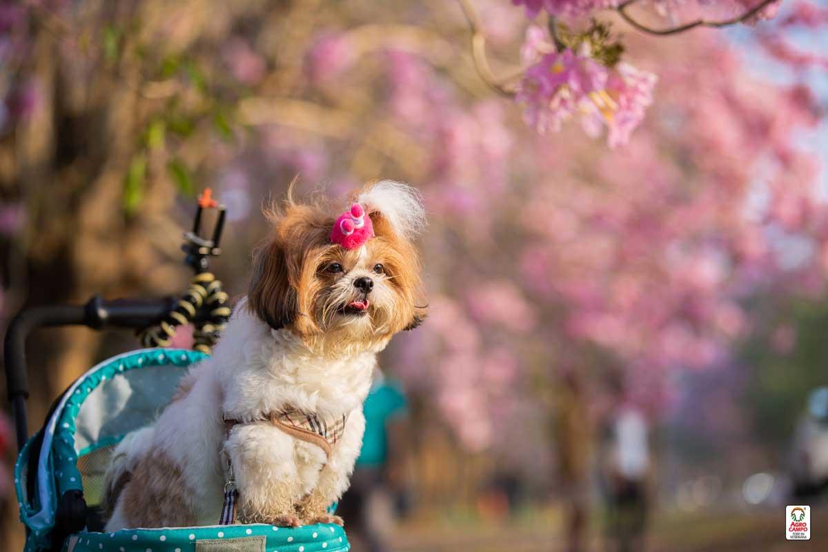 nombres-para-perro-en-japones-hembra