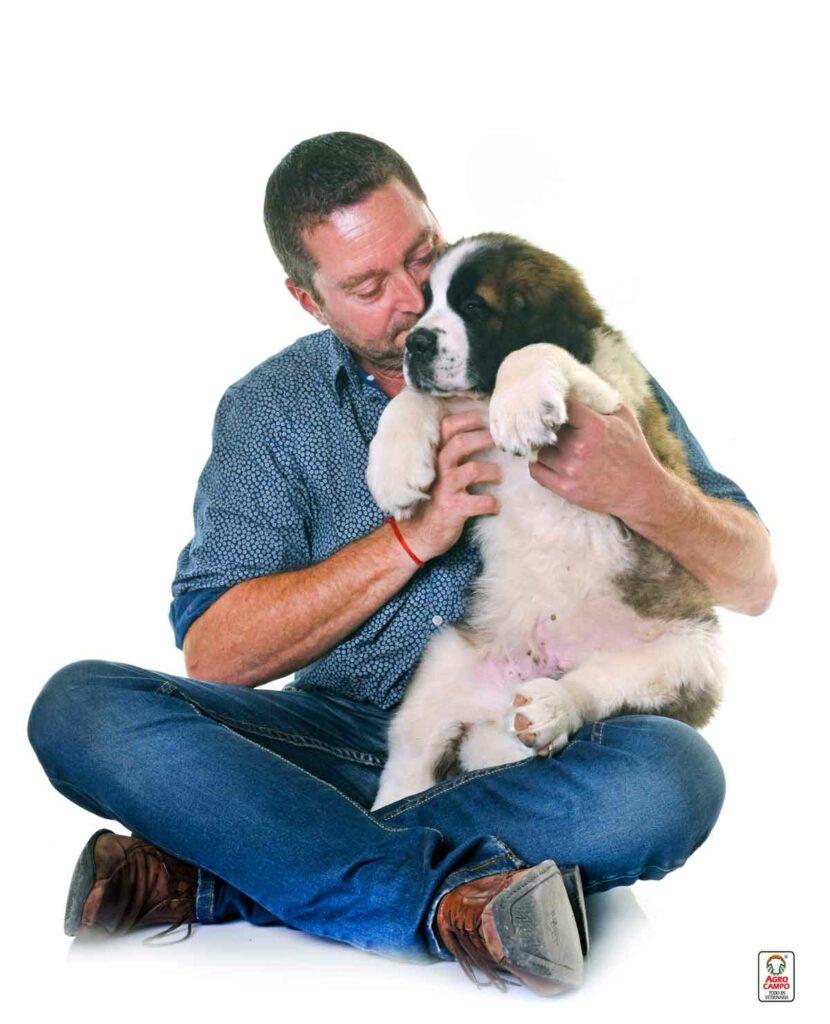perro-san-bernardo-cuidados