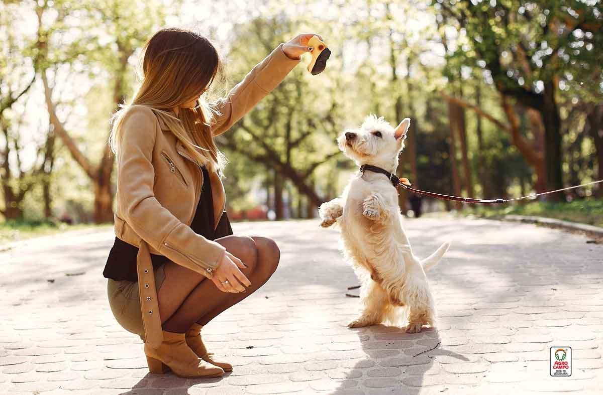 adiestramiento-en-perros