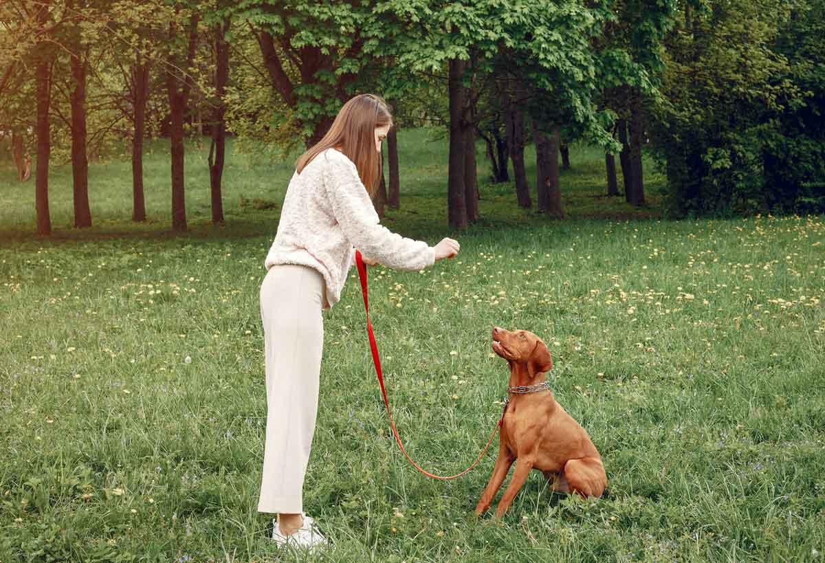como-adiestrar-un-perro
