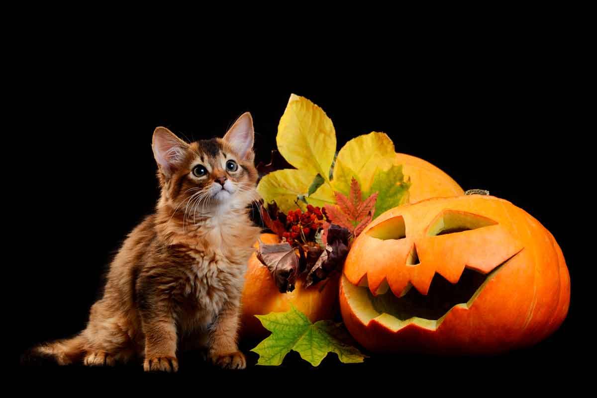 halloween-con-tu-mascota