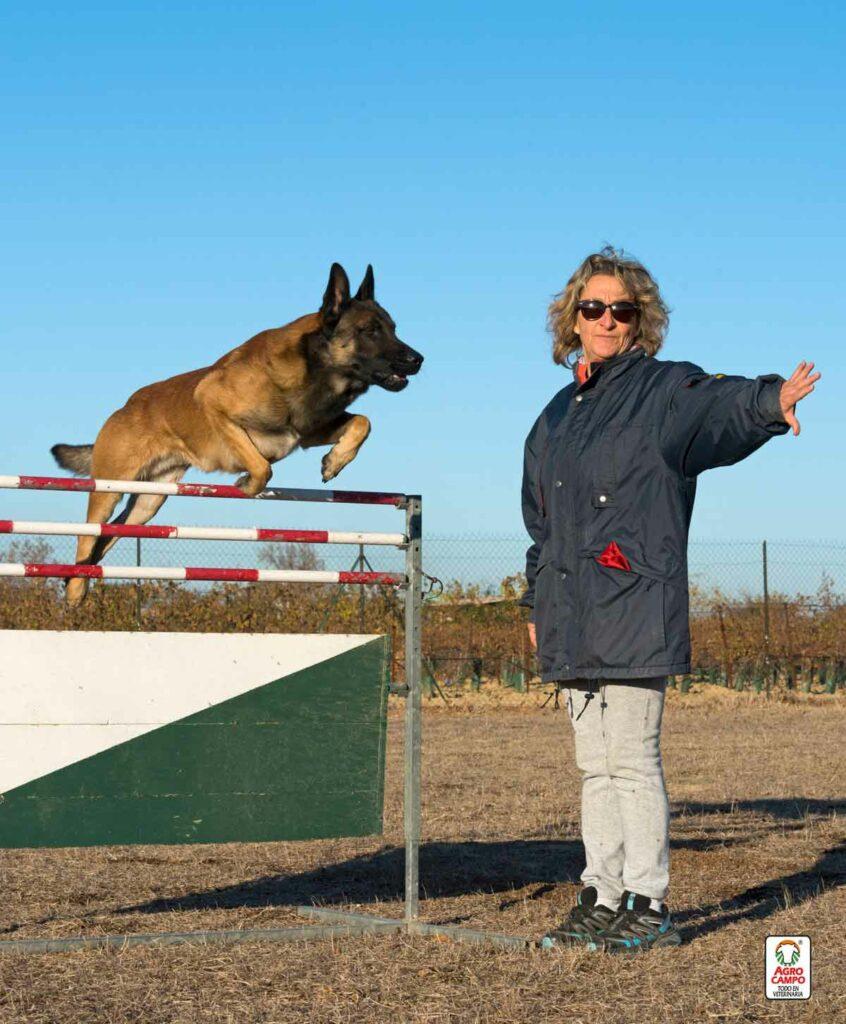 lenguaje-para-adiestrar-perros