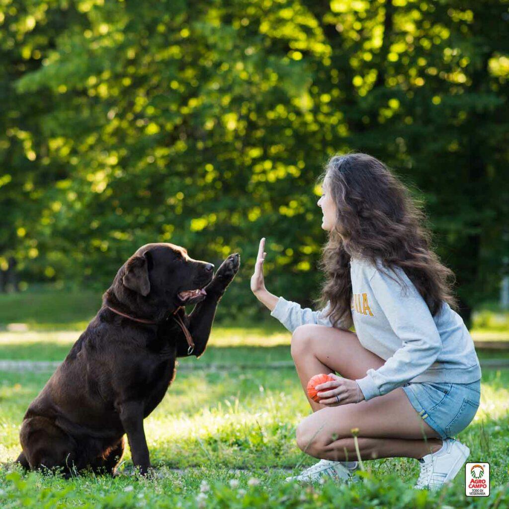 pasos-para-adiestrar-a-un-perro
