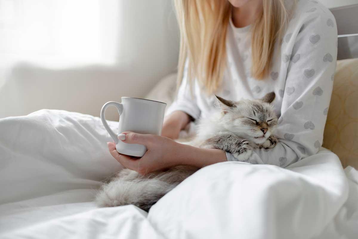 como-cuidar-un-gato