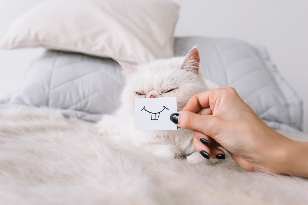 mal-aliento-en-gatos