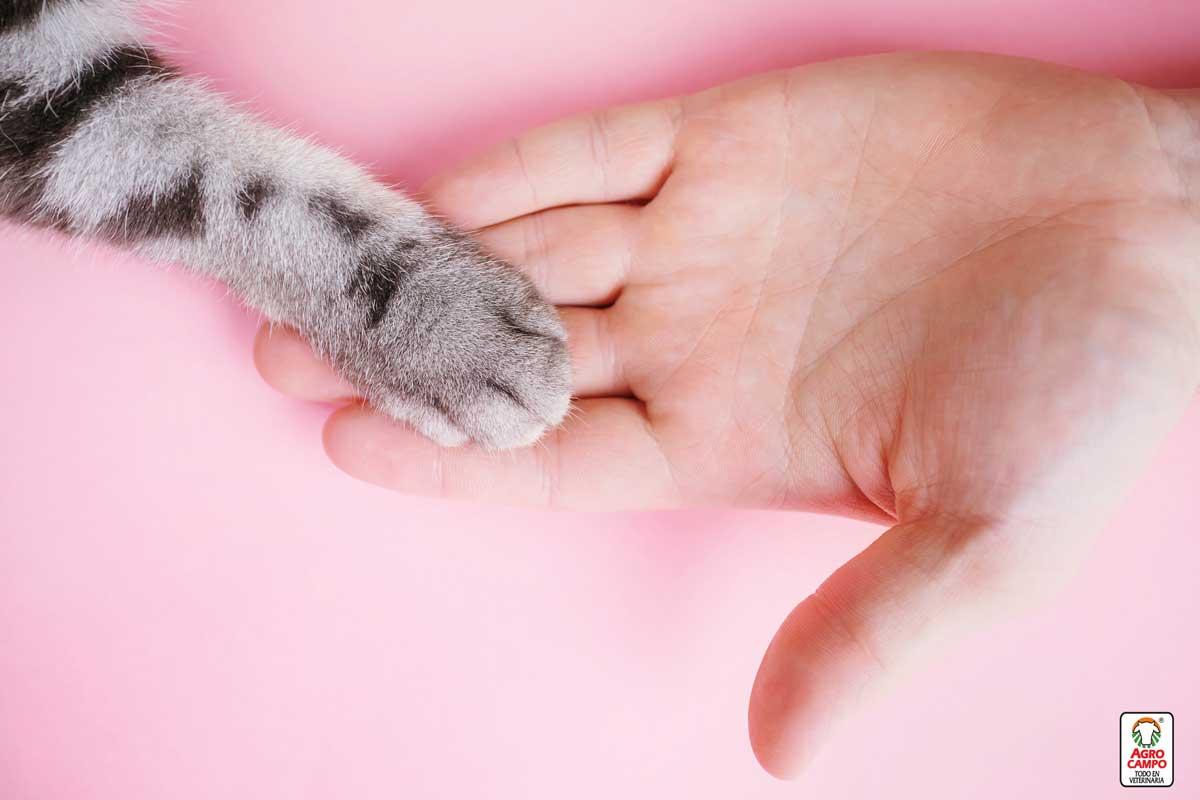 cantidad-de-unas-que-tiene-un-gato