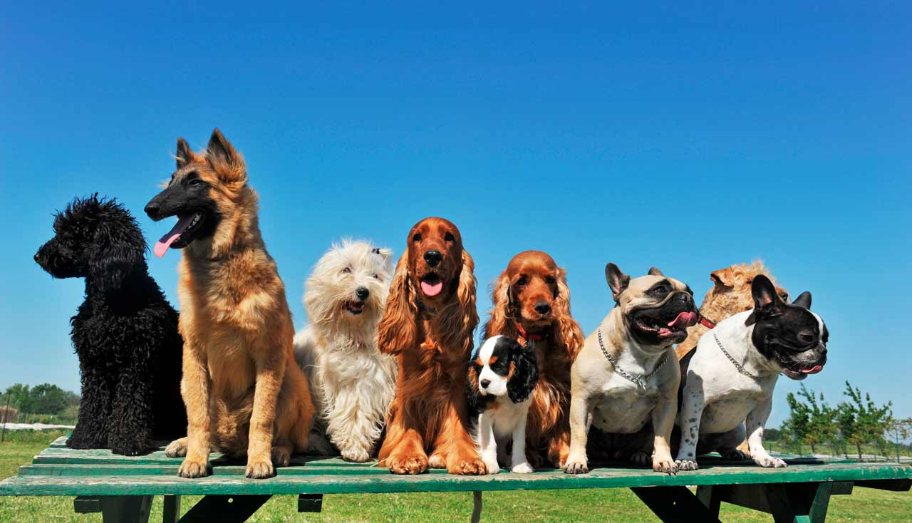 nombres-de-razas-de-perros