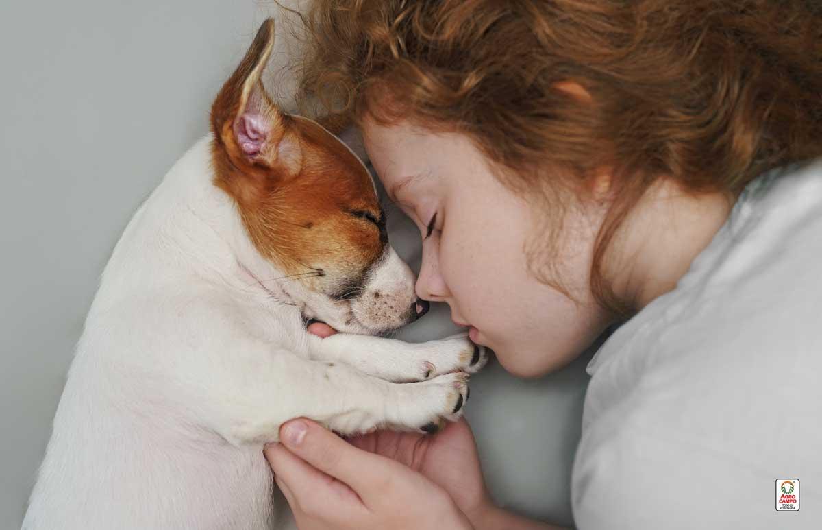 quiero-adoptar-un-perro