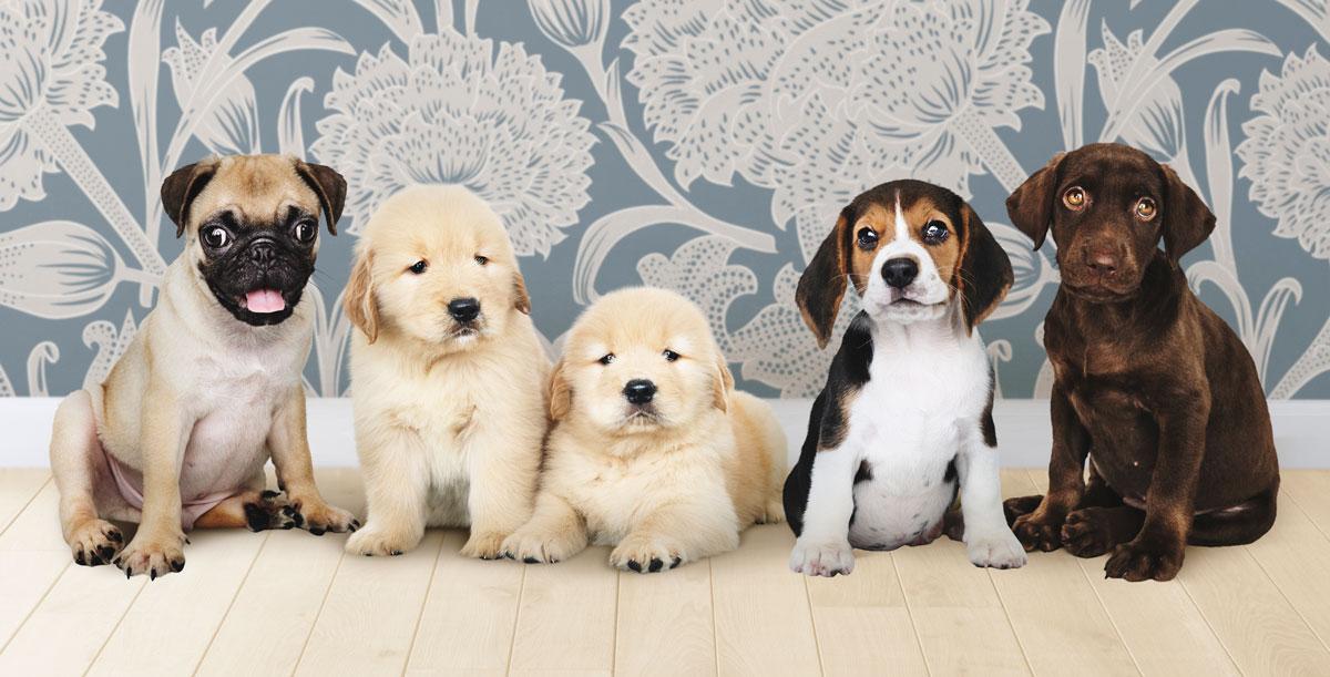 desparasitante-para-perros-cachorros