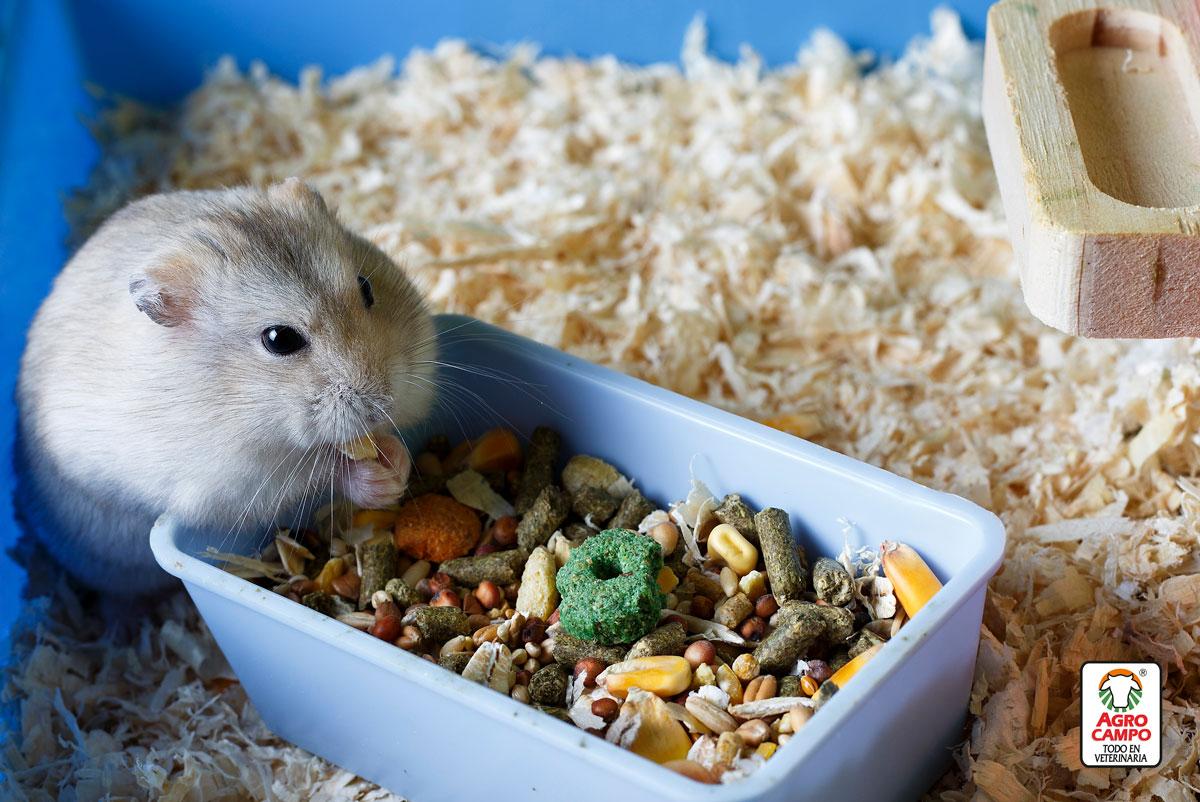 como-hacer-para-que-los-hamster-vivan-mejor