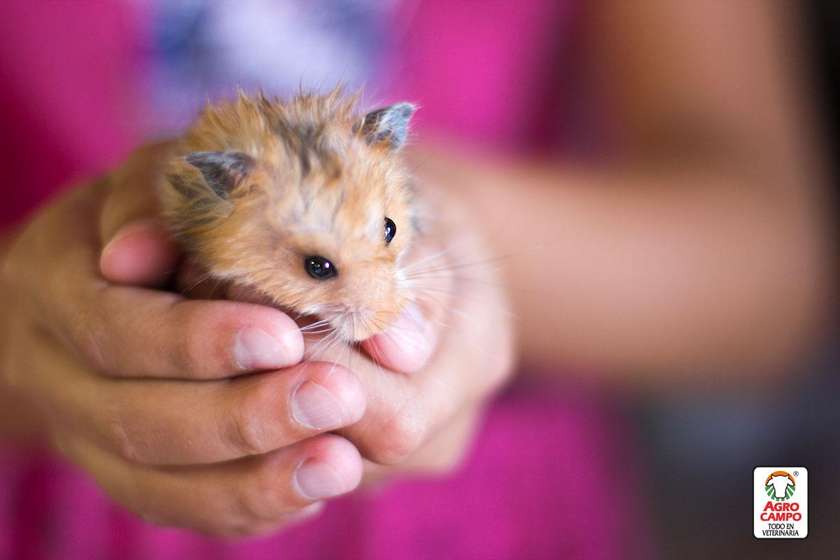 cuanto-tiempo-vive-un-hamster