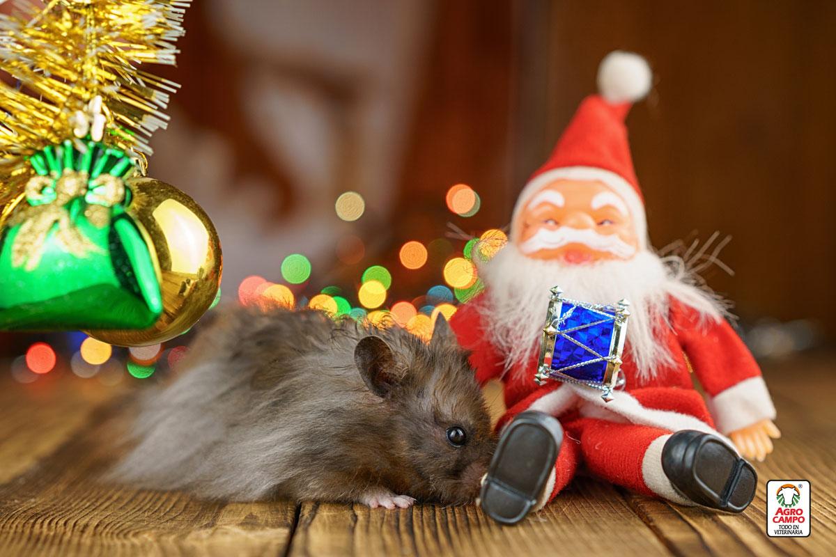 cuanto-vive-un-hamster-chino