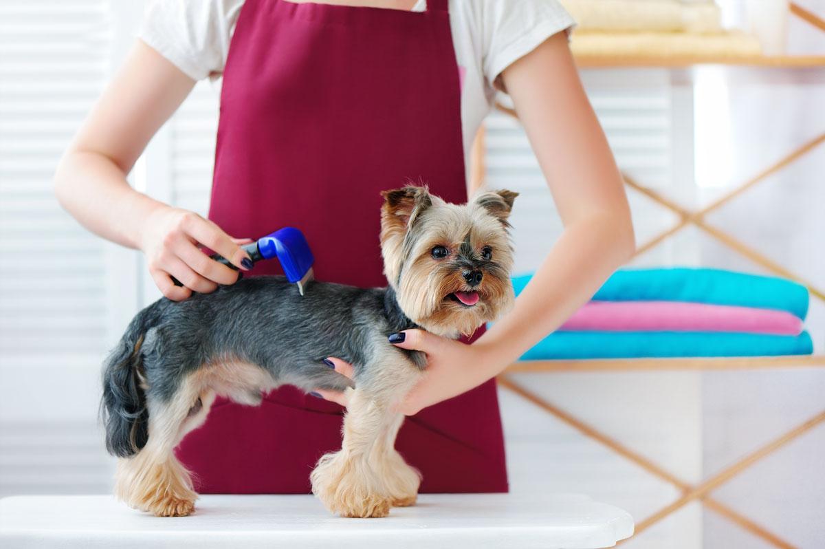 grooming-canino