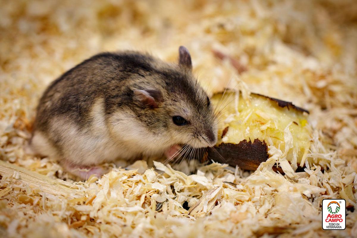 hamster-cuanto-viven