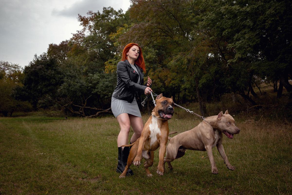 razas-de-perros-bravos
