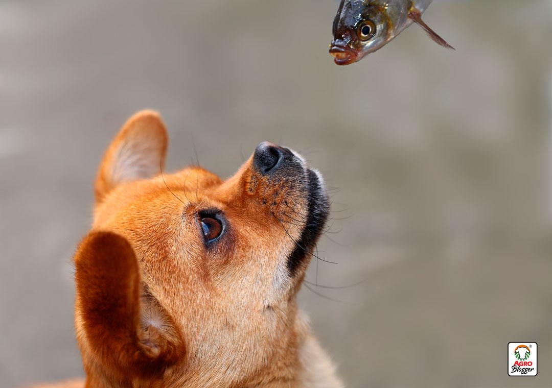 comida-perro-pescado