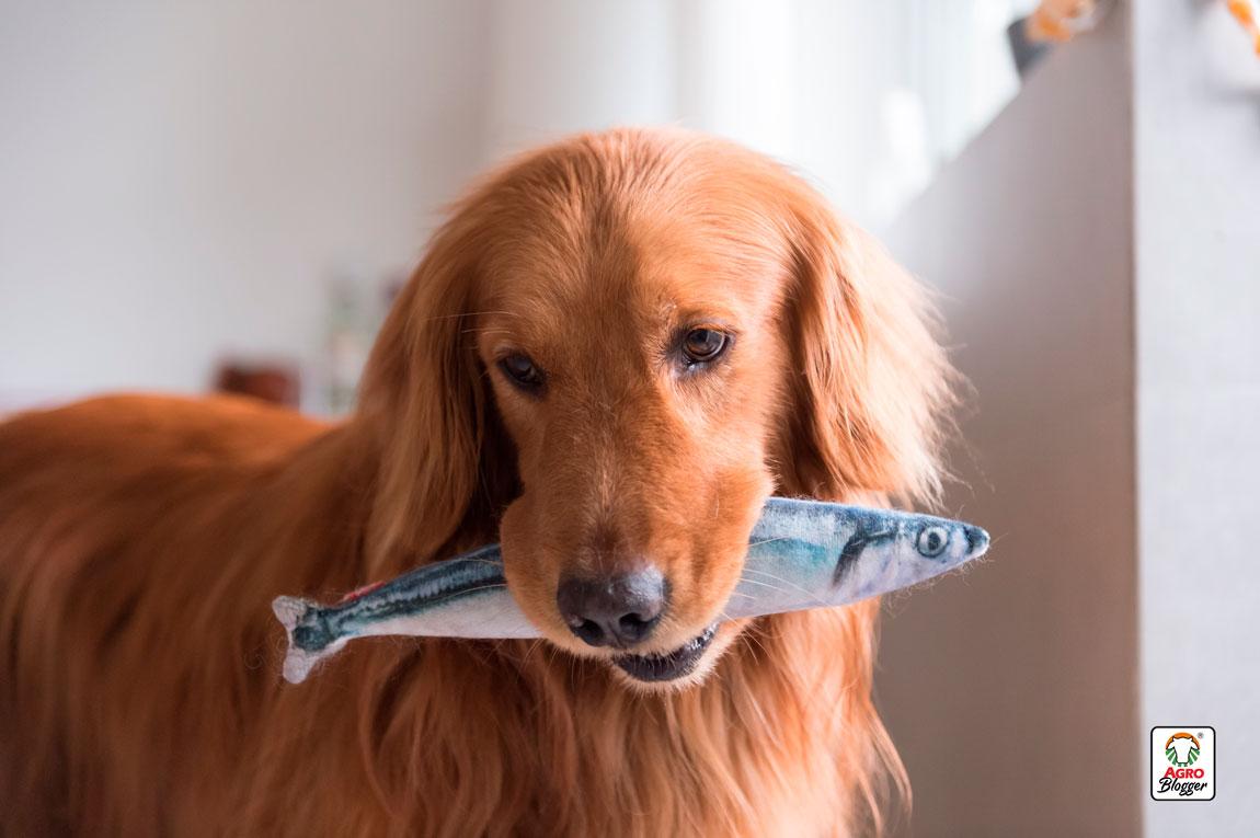 se-puede-dar-pescado-a-los-perros