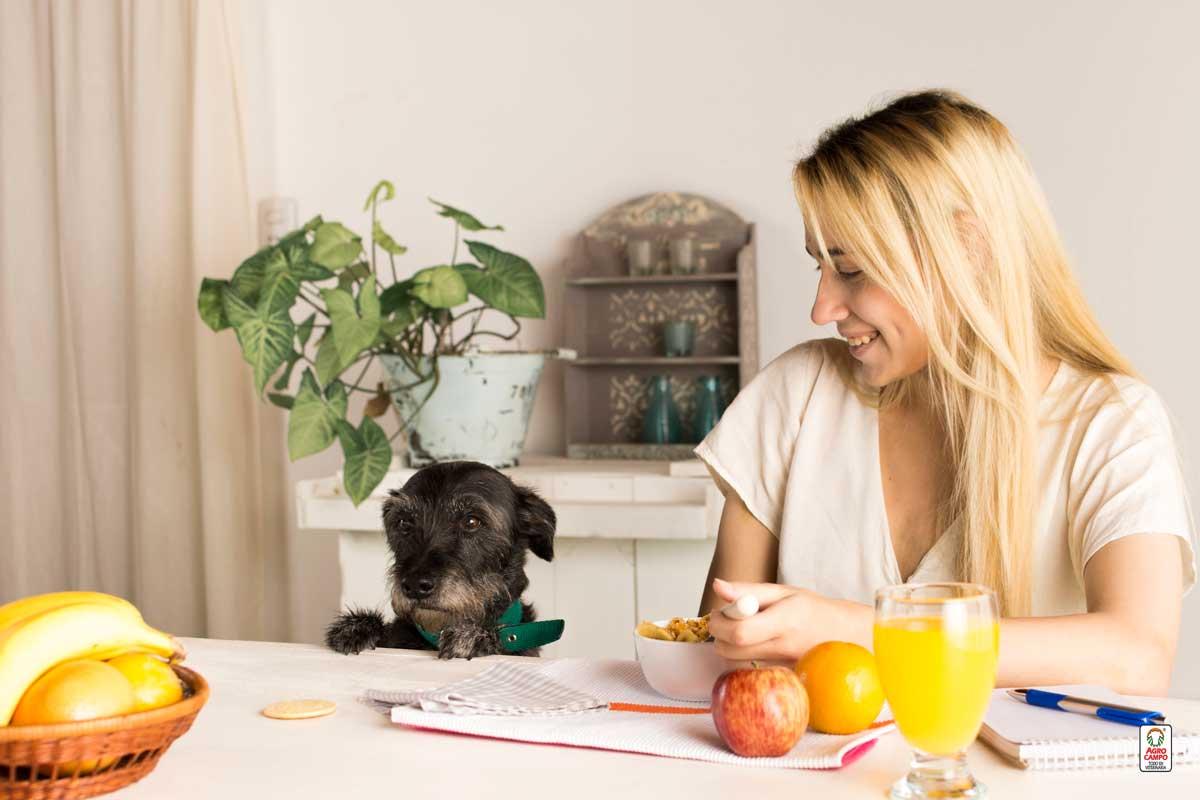 alimentacion-holistica-para-perros