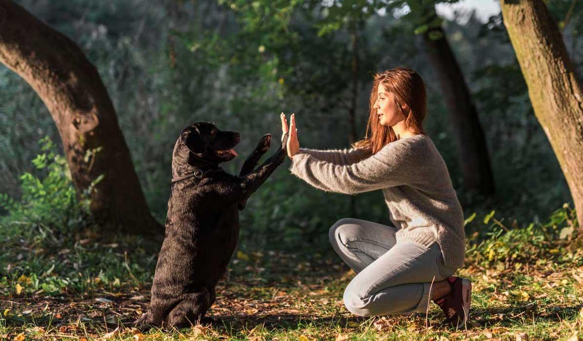alimento-holistico-para-perros