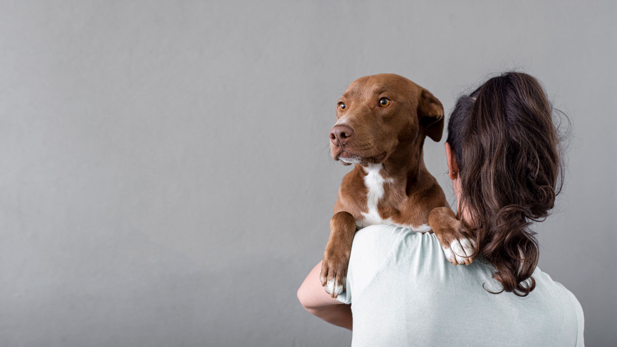 como-cuidar-un-perro