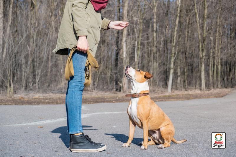 como-se-cuida-un-perro-educacion