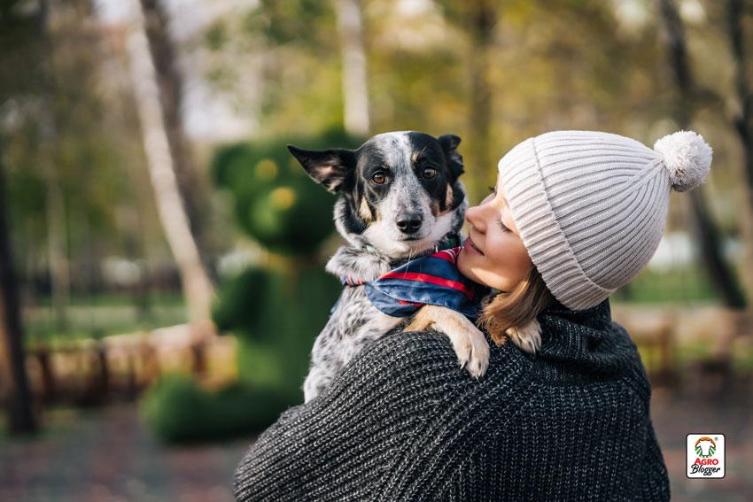 cuidados-de-los-perros