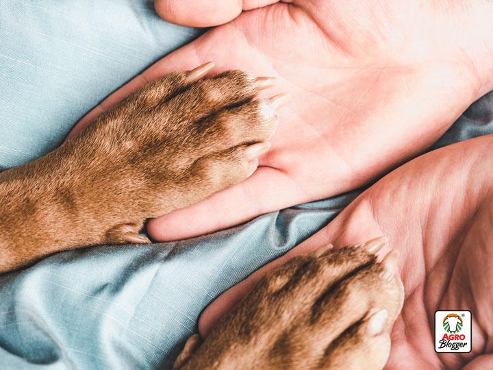 cuidados-perros-adaptacion