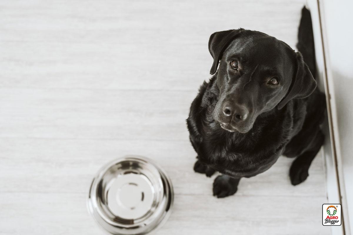 cuidar-perro-alimentacion