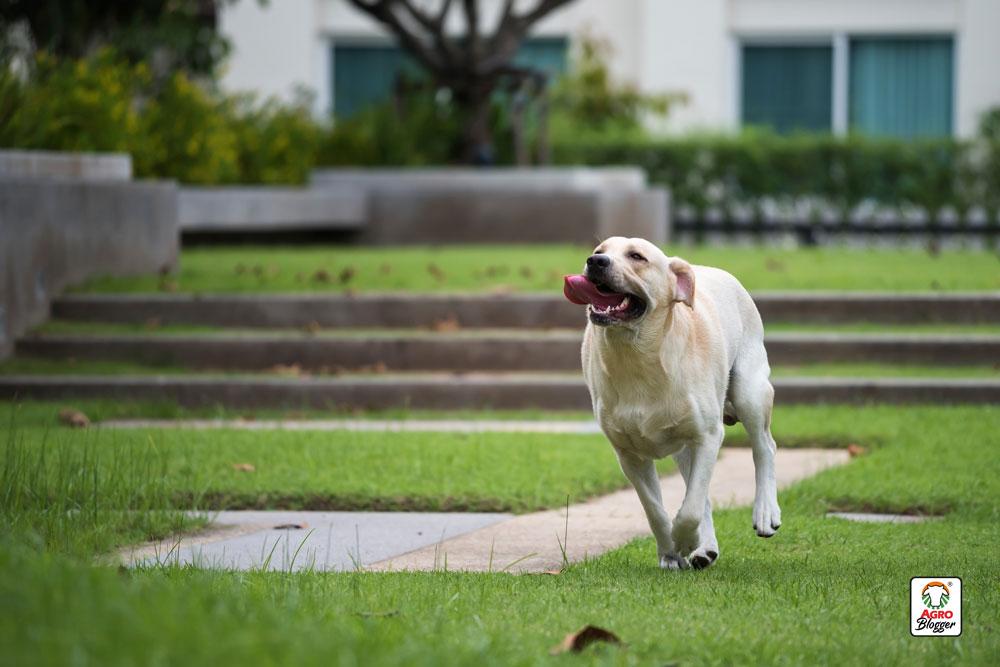 cuidar-perro-ejercicio