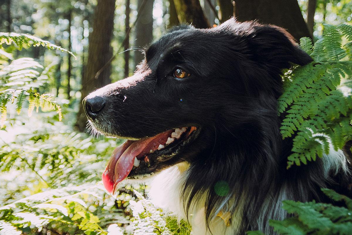 Guarderia-canina-guauventura