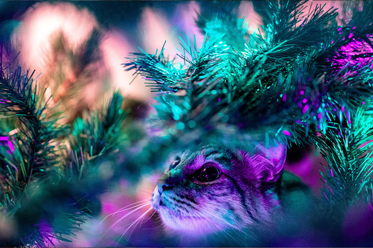 cuidados-de-los-gatos-durante-las-festividades