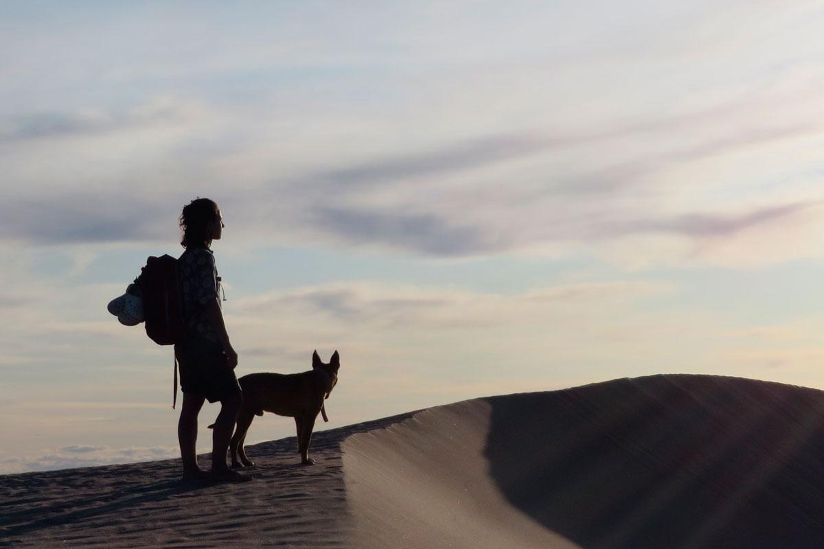 ASSIST-CARD-viajar-con-mascotas