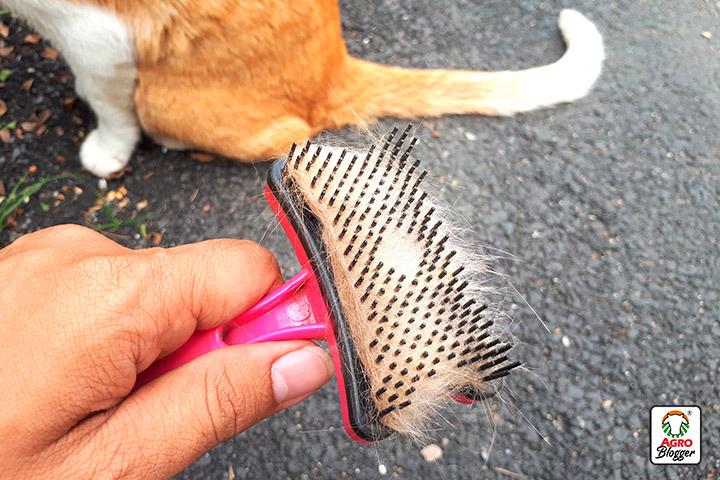 mi gato pierde pelo por zonas