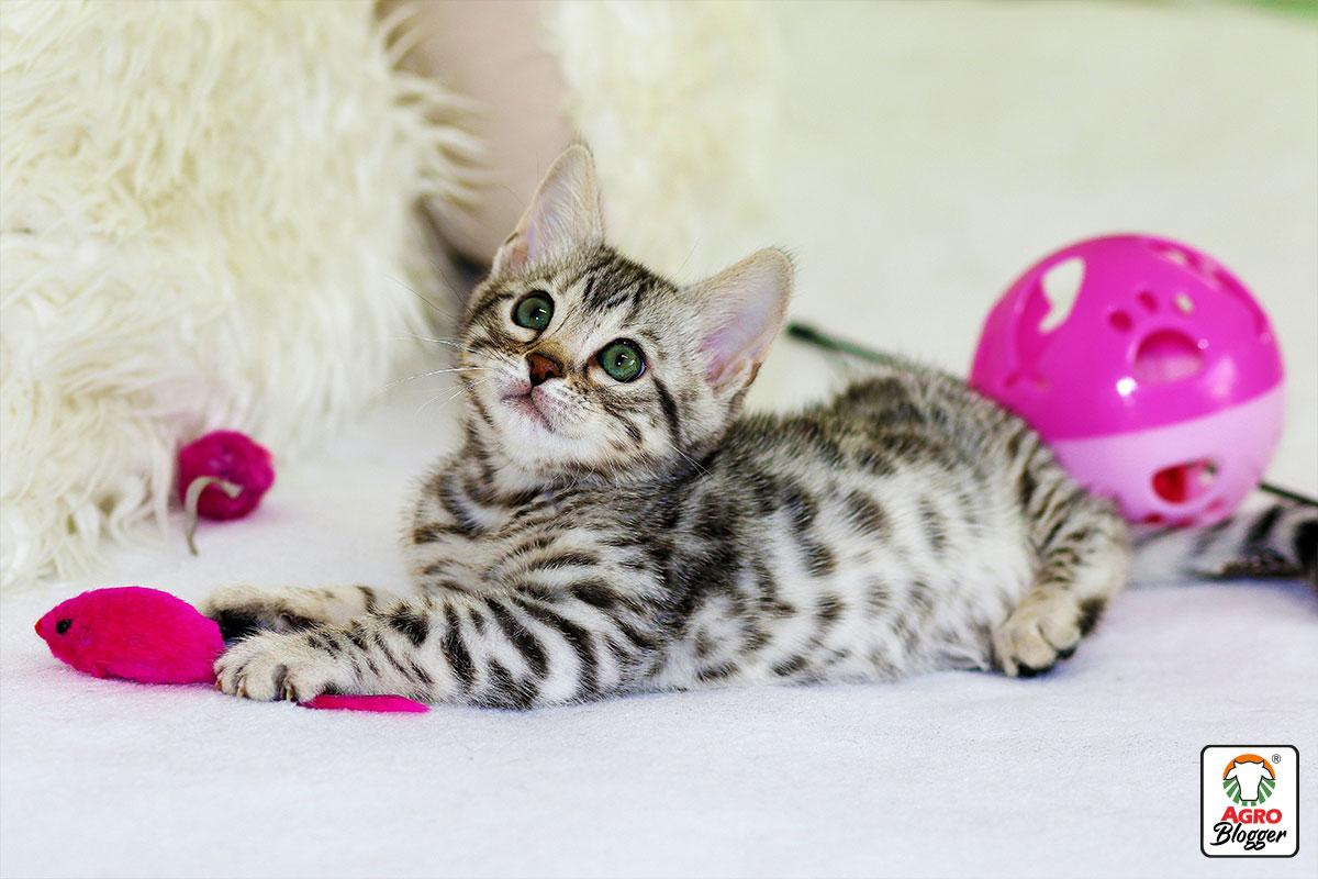 diarrea en gatos bebes