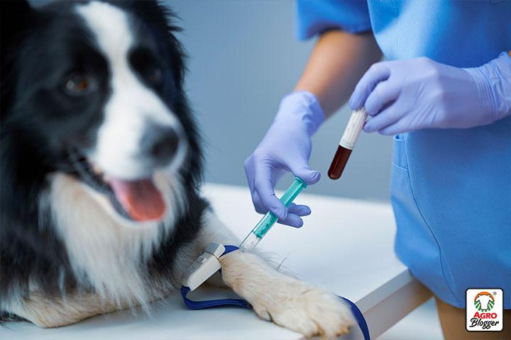 plaquetas bajas en perros